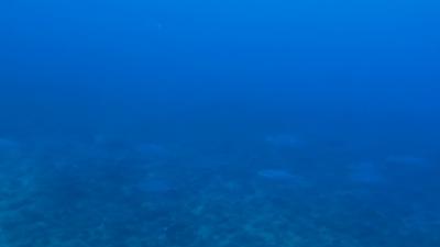 20120314-03イソマグロの大群