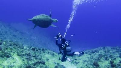 20120316-05アカウミガメ