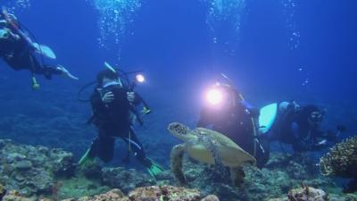 20120318-09アオウミガメ