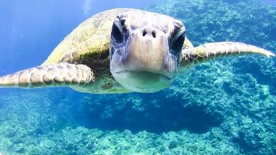 20120323-06アオウミガメの銀ちゃん