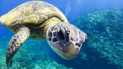 20120323-07アオウミガメの銀ちゃん