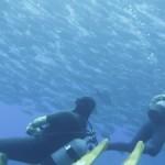 イソマグロ&ロウニンアジに狙われるギンガメ