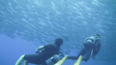 20120324-06ギンガメとダイバー