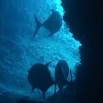 大当たり!サメの巣窟&ロウニン