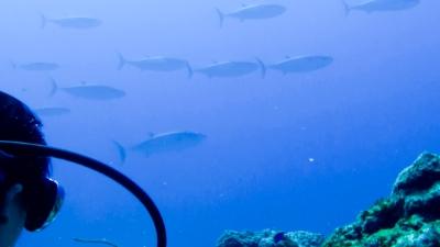 20120326-04イソマグロの大群