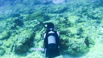 20120326-08アカウミガメ