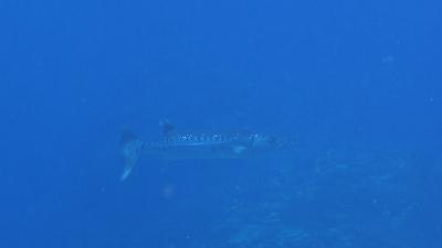 20120327-01バラクーダ
