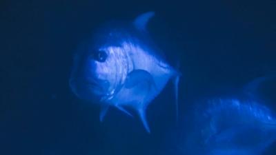 20120328-01迫ってくる巨大ロウニン