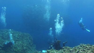 220120320-05ギンガメの大群