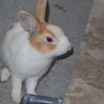 ウサギご来店!