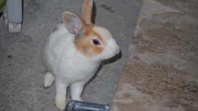 20120329-03ウサギが来店