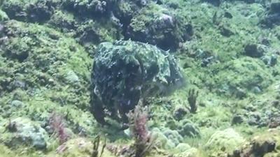 20120406-07コブシメ