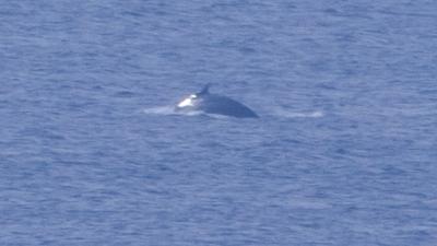 20120406-08ザトウクジラ