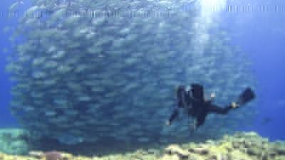 20120407-05ギンガメとゲスト