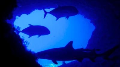 20120408-02ロウニンとサメのコラボ