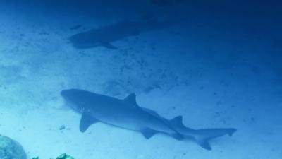 20120409-03サメ