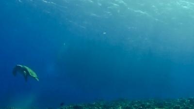 20120416-03ギンガメとアカウミガメ