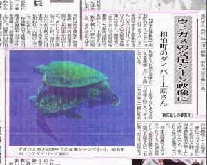 20120417ウミガメの交尾