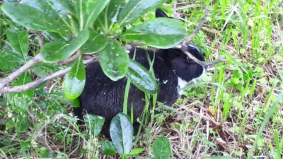 20120419-01お店にウサギ