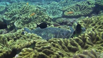20120504-01爆睡中のアオウミガメ