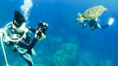20120505-02アオウミガメの銀ちゃん