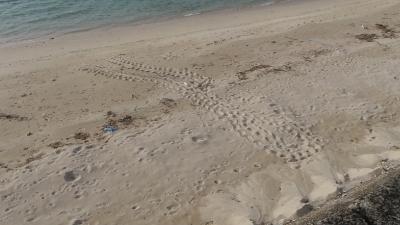 20120515-03ウミガメの足跡