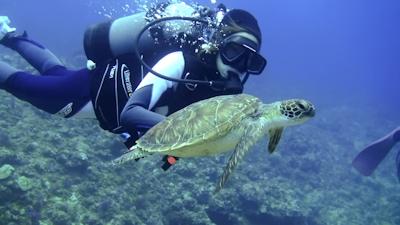 20120517-03小笠原から来たウミガメ
