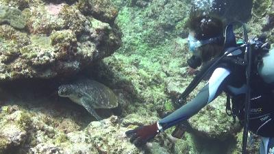 20120522-02アオウミガメ
