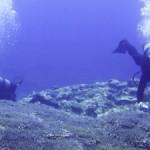 サンゴ調査ダイビング