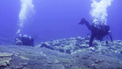 20120526-05サンゴ調査人