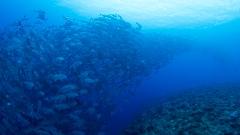 沖永良部島のガイドダイビングスタッフ
