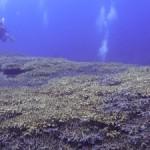 癒し系~サンゴのポイント