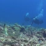 小笠原から来たアオウミガメ