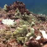 たくましい海の生き物たち