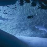 クジラシーズン本格スタート