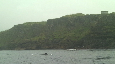 田皆岬とザトウクジラ
