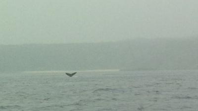 沖泊ビーチとザトウクジラ