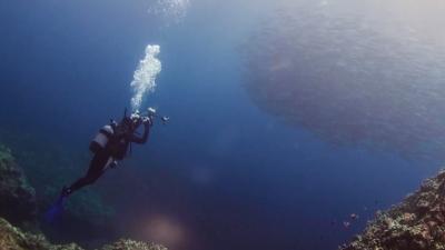 ギンガメの撮影