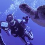 ギンガメとアオウミガメ