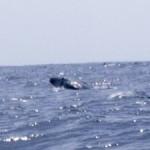 【クジラ跳ぶ!】ゴールデンウィーク