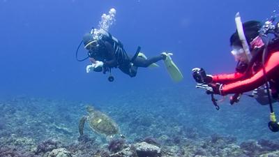 小笠原から来たウミガメ