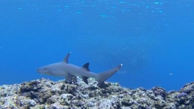 サメとギンガメトルネード