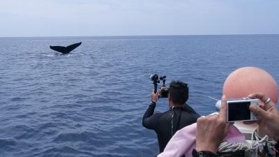 GWザトウクジラのホエールウォッチング