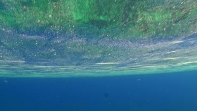 サンゴの卵と水面