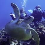 ウミガメの楽園=沖永良部島