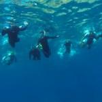ウミガメ探索