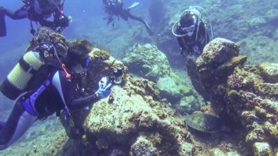 岬の甲羅磨き