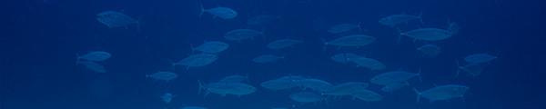 沖永良部島のダイビング予約状況