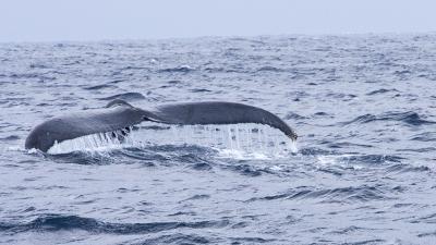 クジラ01