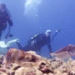 コブシメの産卵&クジラ。。